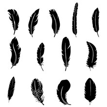 Silhouette Of Bird Feathers