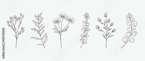 Fotografia Minimal botanical hand drawing design for logo and wedding invitation