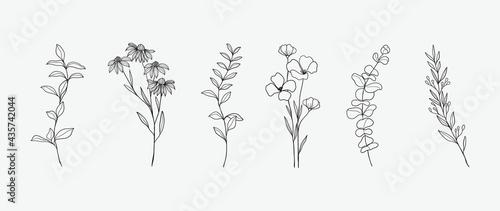 Fotografering Minimal botanical hand drawing design for logo and wedding invitation