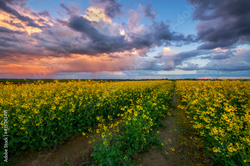 Foto Beautiful sunset over rape fields with bee hives