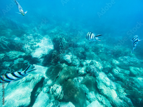 Under the sea Travel in the diving sea Fototapet