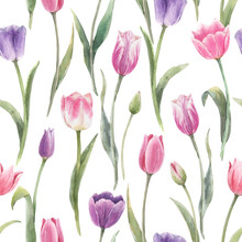 Beautiful Floral Seamless Pattern With Hand Drawn Watercolor Tulip Flowers. Stock Illustration.