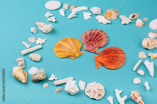 Fotografía Seashells, corals, conches lying on the blue background, isolated with a caption for text