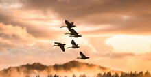 A Flock Of Birds Flying Into A Beautiful Sky During Sunset.