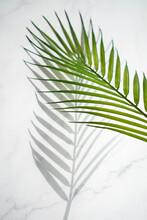 대리석 배경에 야자수잎과 그림자