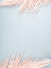 Minimal Design Background With Pastel Pink Pampas Grass On Blue.