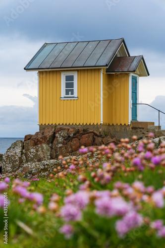 Fotografiet Yellow wooden hut with pink flowers on rocky coast in the seaside village of Torekov in Sweden