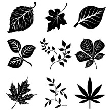 Silhouette Of Leaves Foliage