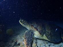 スポットライトを浴びる海亀