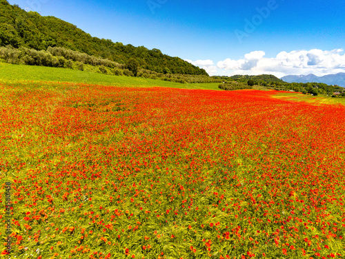 aerial view on the field of poppies #435801458