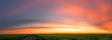 Panoramic Sunrise With Cirrus Clouds Illuminated By Sunbeams, Young Wheat Field At Sunset
