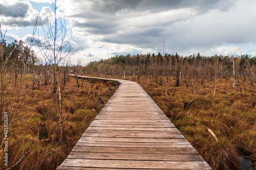 Fotografie, Obraz Old Wooden Footbridge in the Middle of Wetland Swamp Area