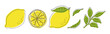 vector illustrations of lemons and leaves for banners, cards, flyers, social media wallpapers, etc.