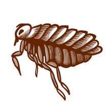 Flea Hand Drawn Icon. Wingless Insect Jumping, Sucking Human, Animal Blood.