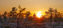 Swamp Landscape At Sunrice. Early Morning At Bog. Sensitive Sunrise In Spring. Nature In Northern Europe, Baltic Countries. Yellow Sunlight, Landscape During Sunup.