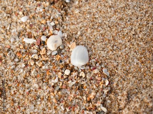 Fotografie, Obraz Conchas nas areia da praia. Shell