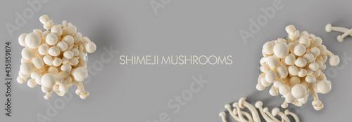Obraz na plátne Banner, Shimiji mushrooms, oyster mushroom from East Asia on a light gray backgr