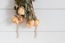 Yellow Roses Drying Upside Down