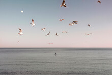 Seagulls Flying Over The Beach And The Silhouette Of A Boy Paddling