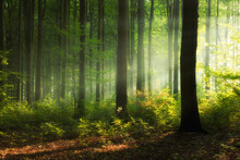 Beautiful Sunny Morning In Green Forest