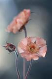 Fototapeta Kwiaty - Wiosenne kwiaty - Kuklik MaiTai