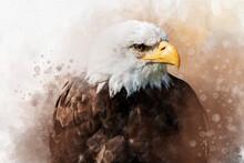 Watercolor Painting Of An American Bald Eagle. Symbol Predator, Bird Illustration.