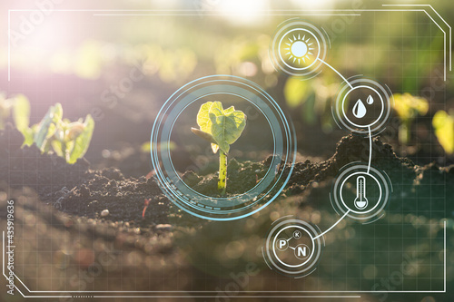 Fotografie, Obraz Agriculture with iot technology in smart farm with precision sensor for monitoring plants