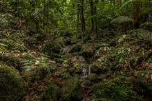 Gorgeous Jungle With Mossy Rocks Around A River Flowing Downhills With Bright Trees Around