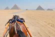 Horse Carriage In Giza Pyramids In Cairo,  Egypt