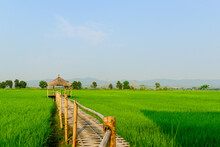 Rice Field Landscape With Cottage
