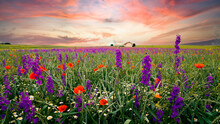 Agriculture Field, Grainfield With Delphinium Flowers (larkspur) And Poppies In Summer On Sunset Clouds Sky. Rhineland Palatinate Germany. New Natural Scenery. Header For Website