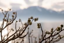 Grass, Lake, Mountain And Sky