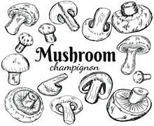 Champignons Set. Vector Illustration Of Mushrooms Champignons On White Background. Hand Drawn Style. Organic Vegetarian Product. Great For Menu, Label, Product Packaging, Recipe