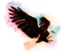 Bald Eagle 3d Illustration In The Style Of Watercolor Painting Isolated On White Background