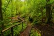 Rezerwat Buki nad jeziorem Lutomskim   Sierakowski Park Krajobrazowy