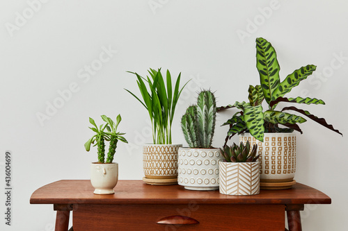 Fototapeta Stylish composition of home garden interior filled a lot of beautiful plants, cacti, succulents, air plant in different design pots