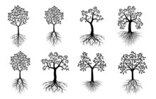 Set Black Vector Trees. Nature And Four Seasons.