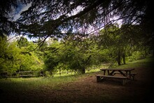 Wooden Table For Picnics In The Italian Woods Of Liguria, In The Shade Of Huge Trees