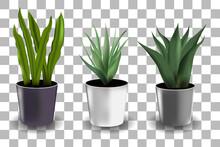 Set Of House Plant