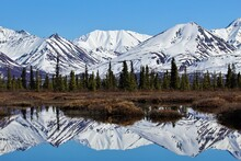 Chugach Mountains Reflect In A Vernal Pond In The Matanuska Valley, Alaska