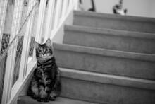 Un Chat Qui Sait Comment Garder L'escalier De Sa Maison