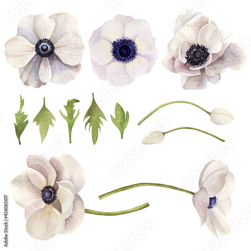 Canvas Print Set of watercolor hand drawn flowers anemone and leaves