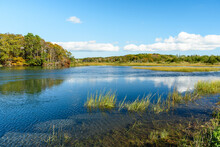 Large Pond In A Tidal Marsh With A Deciduous Forest In Background On A Sunny Autumn Day. Cape Cod, MA, USA.