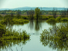 Water Surface, Vegetation And Coot Duck On The Shapshugskoye Reservoir In The Foothills Of The Western Caucasus, Southern Russia With Low Mountains In The Distance Sunny Spring Day