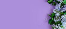 Long Copy Space Banner With Lilac Branch Flowers. Ideal For Birthday, Anniversary, Spa, Aroma Therapy, Women's Day.