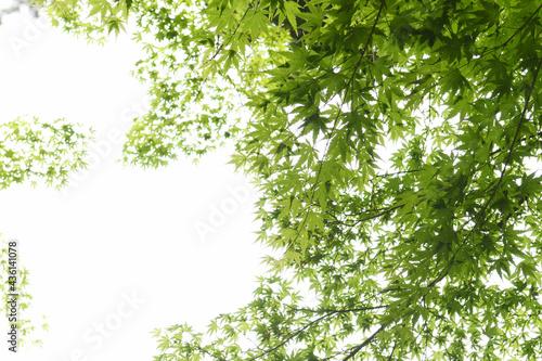 Canvastavla 森の景色