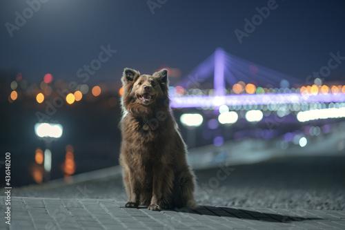 Fotografie, Obraz Adult mongrel dog