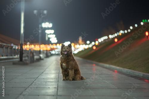 Obraz na plátně Adult mongrel dog