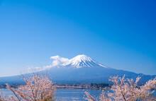 富士山と桜 河口湖 2021年
