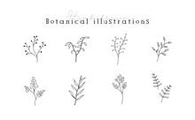 植物の線画イラストのセット シンプル ボタニカル ナチュラル 葉 自然 おしゃれ